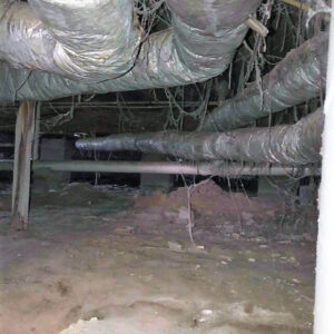 Before Crawl Space Encapsulation | Andalusia Alabama